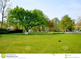 Green Field With A Tree In Keukenhof Park Royalty Free Stock Image 1045