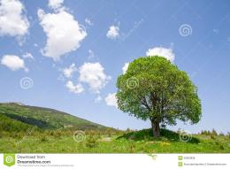 Single Green Tree On A Field Royalty Free Stock ImageImage 195