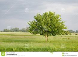 Green Tree On A Field Stock PhotoImage: 55070988 434