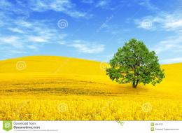 Green Tree In The Field Stock PhotographyImage: 8804972 936
