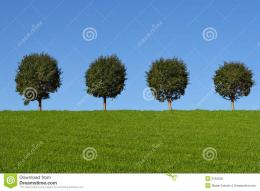Green Fields And Trees Royalty Free Stock PhotosImage: 3122528 1383