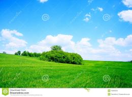 Green Field And Trees Royalty Free Stock ImagesImage: 18369349 629