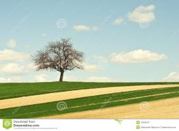 Single Tree On Green Field Royalty Free Stock PhotographyImage 119