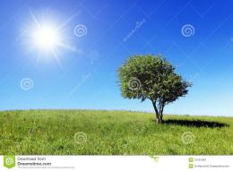 Green Field And Lonely Tree Stock ImagesImage: 15165494 1340