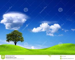 Royalty Free Stock Photos: Tree on green field 1419
