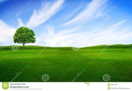 Tree In The Green Field Royalty Free Stock ImageImage: 28971186 1723