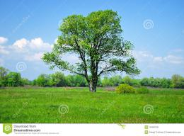 Green Tree And Field Royalty Free Stock PhotosImage: 18458748 663