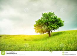 Beautiful Oak Tree On Green Field Royalty Free Stock ImagesImage 1575
