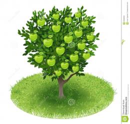 Summer Apple Tree with green apple fruits in green field, illustration 1025