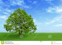 Green tree in the field with blue sky and white clouds 701