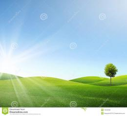 One Tree On Green Field Royalty Free Stock PhotoImage: 15334985 1891
