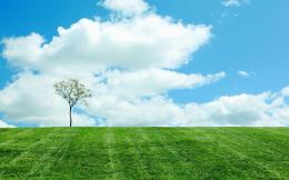 Single tree on the green field wallpaper 1100