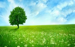 greenlands wallpaper, silent tree, dandelions, green field space | HD 973