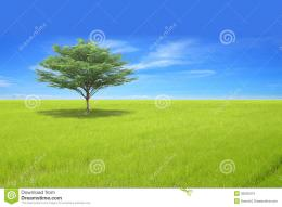 Single tree on green field and blue sky 1403