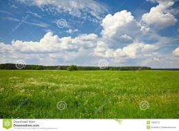 Tree In The Green Field Stock PhotographyImage: 15902772 961