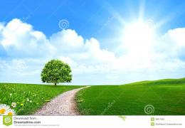 Pathway Near Tree In The Green Field Stock PhotographyImage 1691