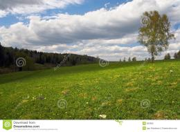 Green Field And Lonely TreeRoyalty Free Stock PhotoImage: 820805 1703