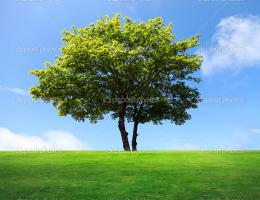 big maple tree on green field — Stock Photo © majaFOTO #6003640 1632