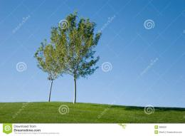Green Grass Field And Tree Stock ImageImage: 3898631 1797