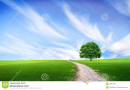 Pathway Near Tree In The Green Field Royalty Free Stock PhotosImage 1135
