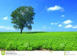Tree And Summer Green Field Stock PhotographyImage: 21189862 1127