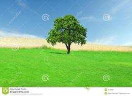 Green Field With Lonely Tree Royalty Free Stock ImagesImage 389