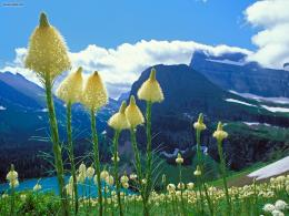 Nature: Beargrass Grinnell Lake Glacier National Park Montana, picture 110