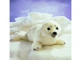 Related Pictures harp seal pup wallpaper harp seal pup wallpaper 1960