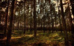 HDR Forest Wallpapers 424