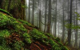 hdr forest background image hdr forest desktop wallpaper hdr forest 1710