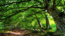 HDR Forest Wallpapers 1349
