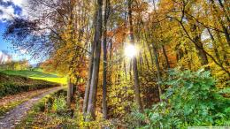 sunlighted forest hdr 1516