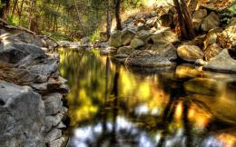 Nature forest woods streams hdr photography wallpaper background 539