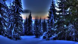 forest in winter hdr wallpaper tags evergreen forest winter sundown 287