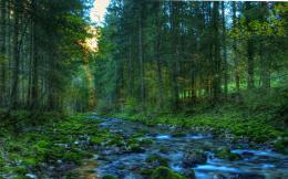 HDR Forest Wallpapers 1360