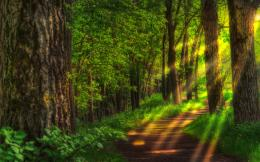 landscapes forest HDR photography wallpaper background 571