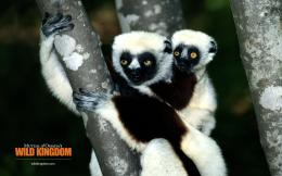 1920x1200 Lemur desktop PC and Mac wallpaper 1579