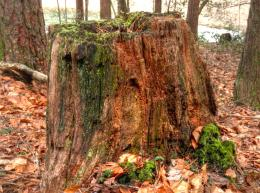 Mossy Stump 1183