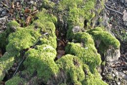 Mossy stump| My Photos | Pinterest 314