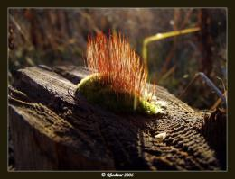 mossy stump by Rhodaur 1200