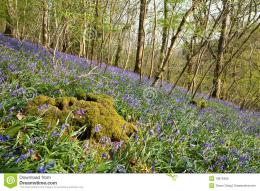 Mossy Tree Stump In The Bluebells Royalty Free Stock ImagesImage 1719