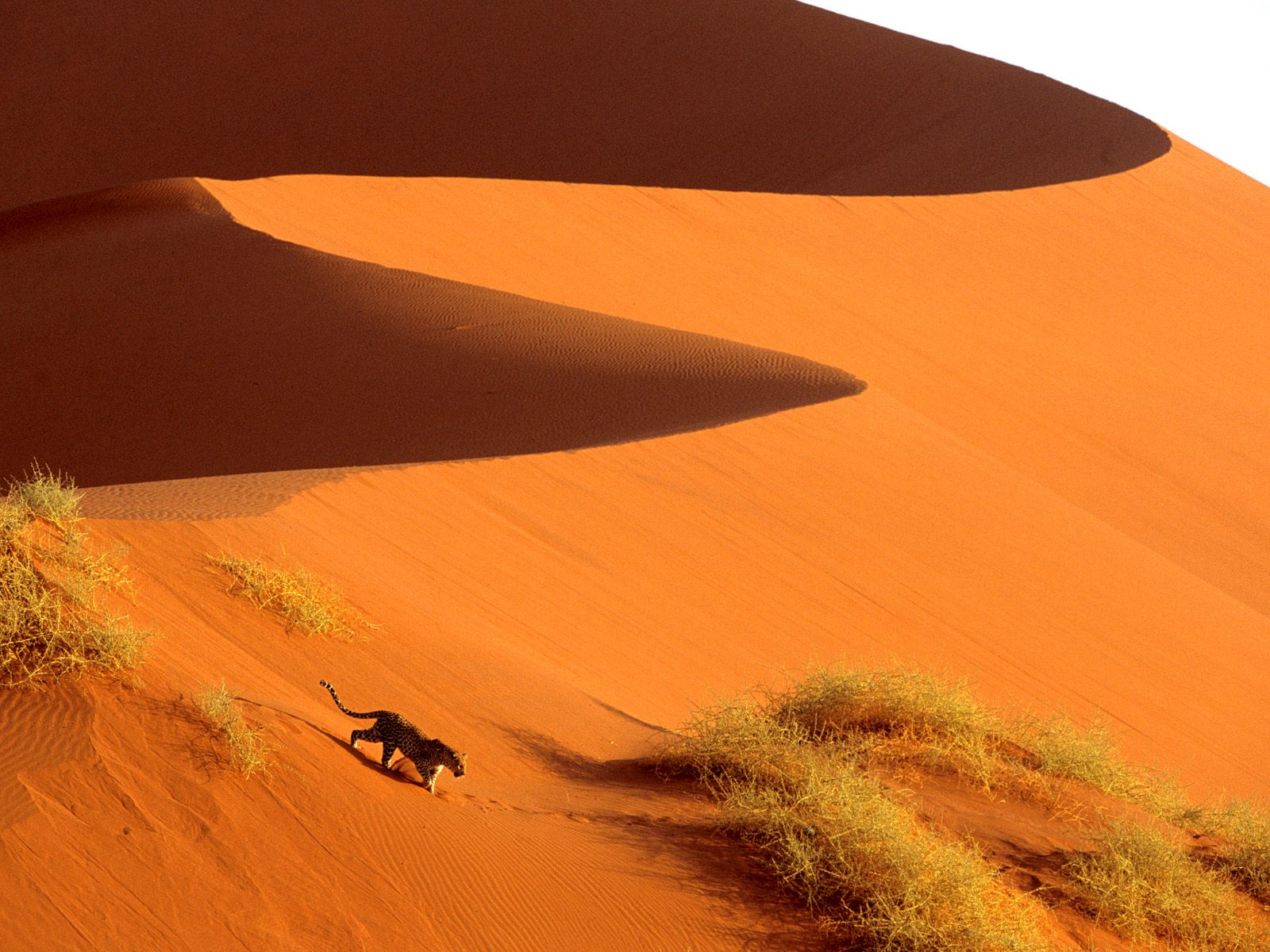 Crossing the Sand Dunes of Sossusvlei Park Namibia AfricaAfrica 1465