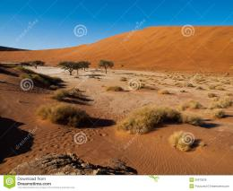 and red dunes of Namib desertNamib Naukluft National Park, Namibia 1408
