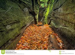 narrow rock crevice with green walls and a floor covered with autumn 1744