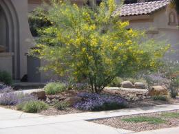 Desert Pool Landscaping Ideas : Basic Natural Desert Landscaping Ideas 1743
