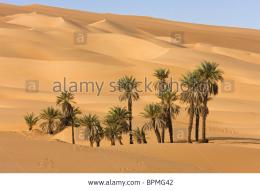 , in the libyan desert, Oasis Um el Ma, Libya, Sahara, North Africa 614