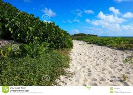 Path to the sea of white sandAtlantic OceanCayo GuillermoCuba 1485