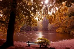Peaceful Autumn Water Bench Calm Nature hd wallpaper #489510 349