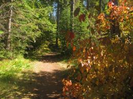 On The Peaceful Colourful Autumn Trail Near Olive Lake In Kootenay 693