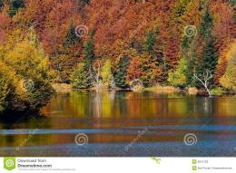 More similar stock images of ` Autumn vivid colors on lake ` 1103